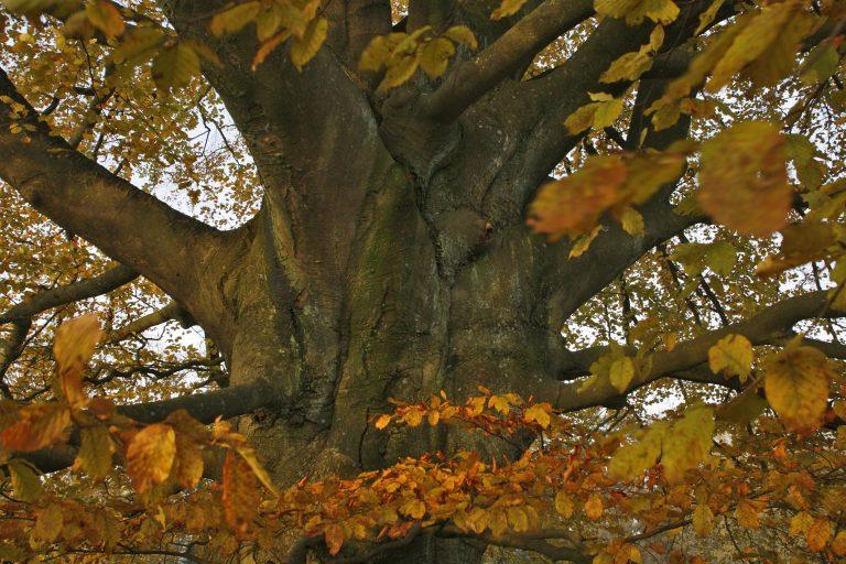 11 oktober – Lange herfstwandeling Breukinkheide
