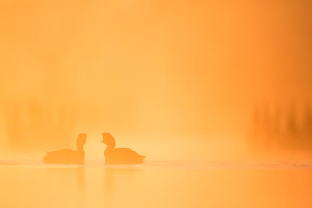 Winnaars van de prestigieuze Fritz Pölking fotowedstrijd
