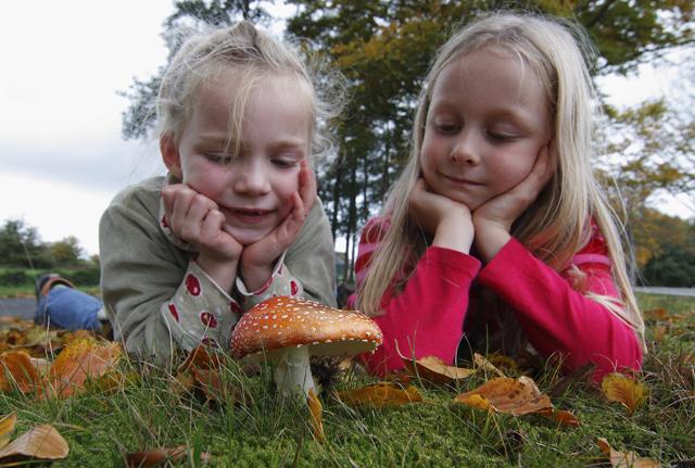 De bossen in, op zoek naar paddenstoelen!