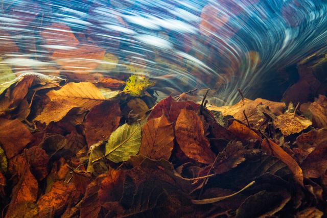 De European Wildlife Photographer of the Year winnaars zijn bekend