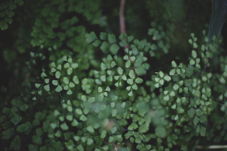 Duurzame dinsdag – De Groene Pagina