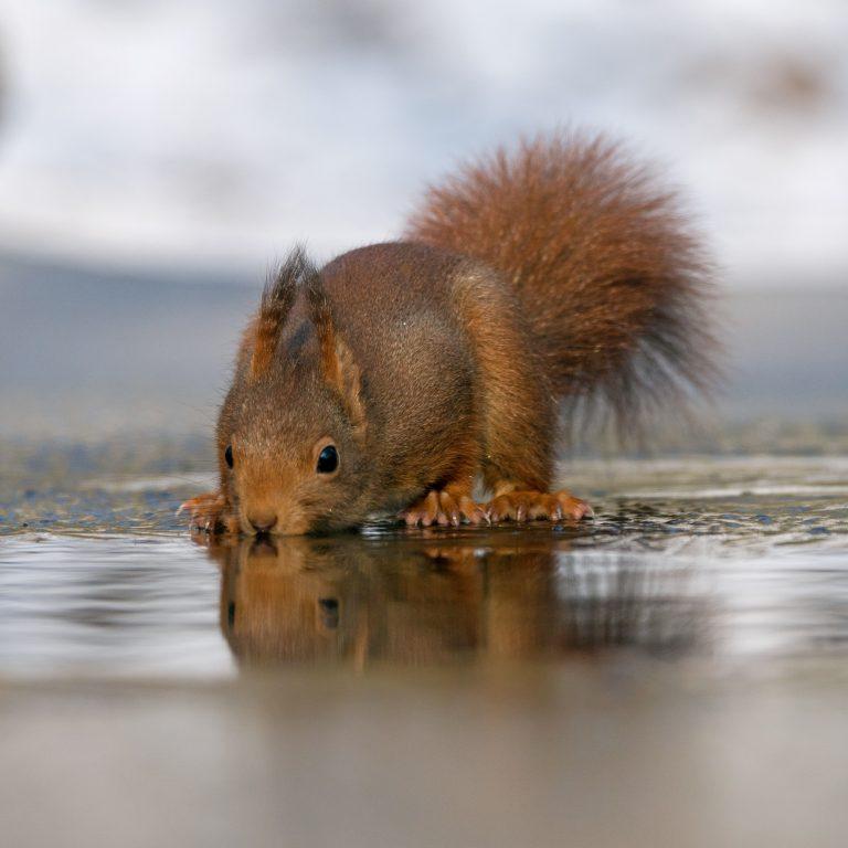 Toptijd voor eekhoorns