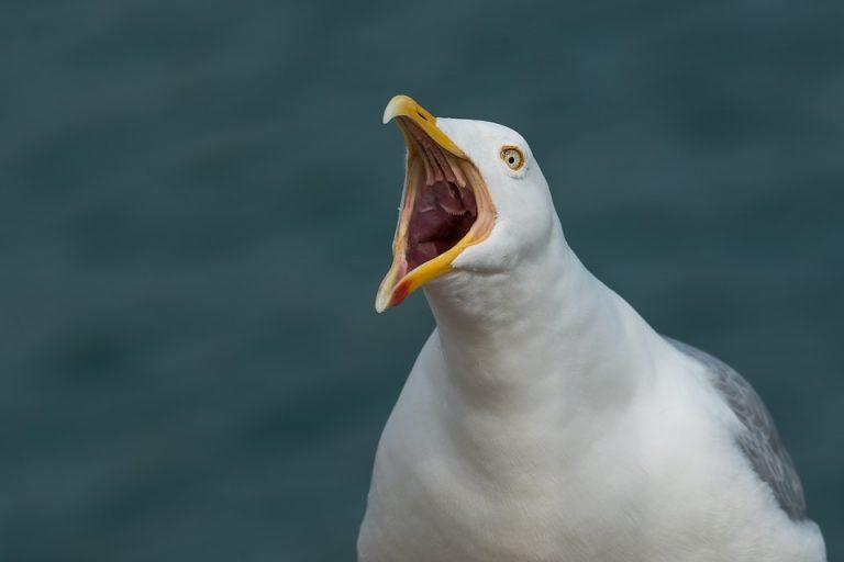 Wat is het luidruchtigste dier op aarde?