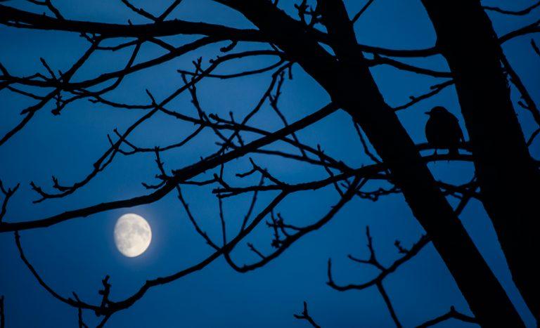 Waarom is de maan die door de bomen schijnt eigenlijk rond?
