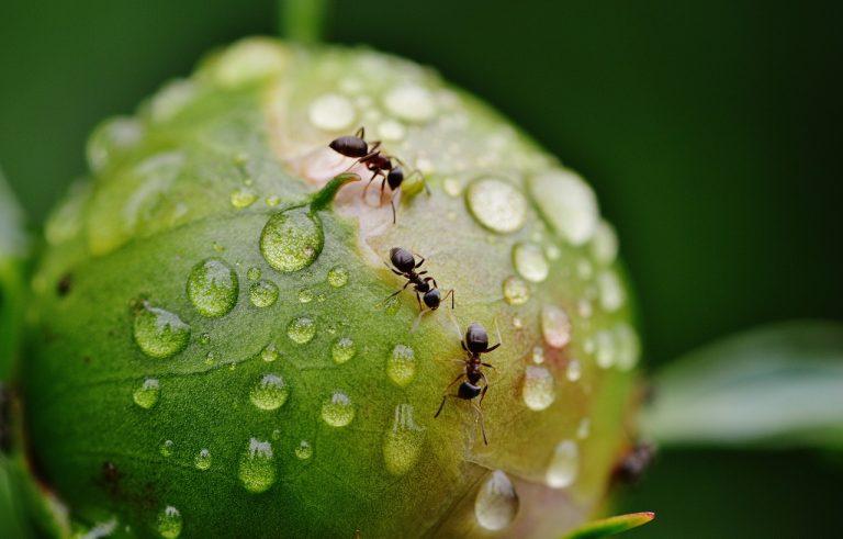 In de ban van mieren
