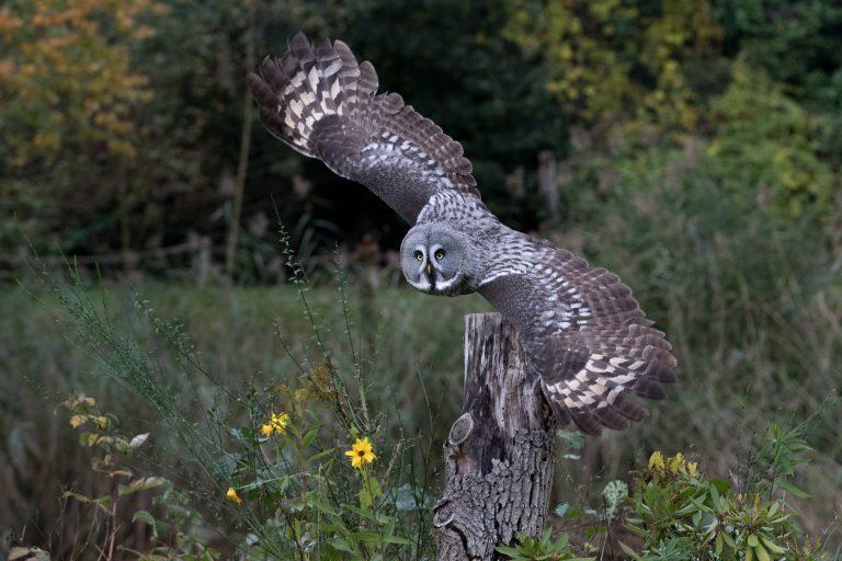 Geen roofvogelshows meer in Antwerpen
