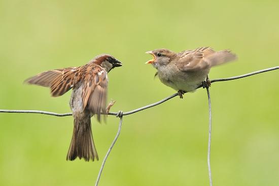 Een vogelloze tuin is armoede