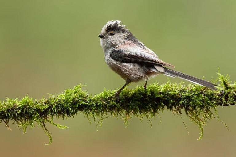 Vogels tellen op hogere leeftijd is lastig