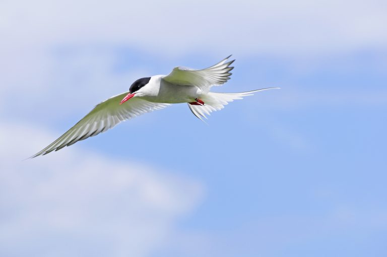 Download nu gratis de Vogelmagazine-special over vogelmigratie!