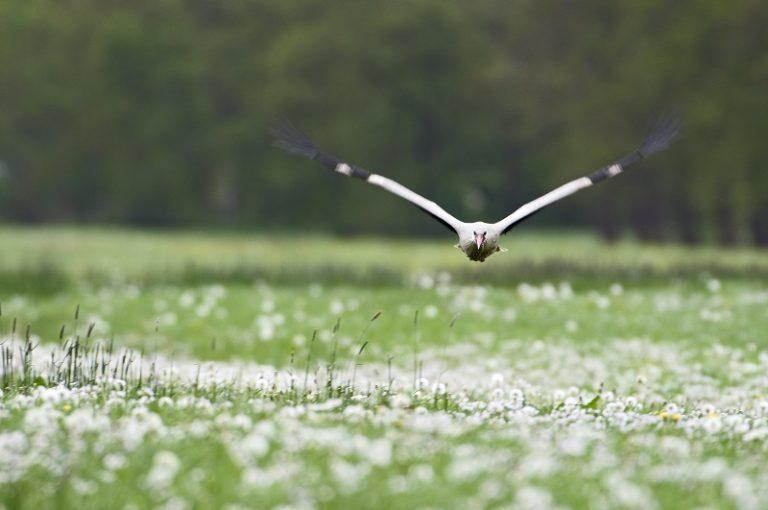 Recensie: De magie van vogels en waarom vogels kijken gelukkig maakt