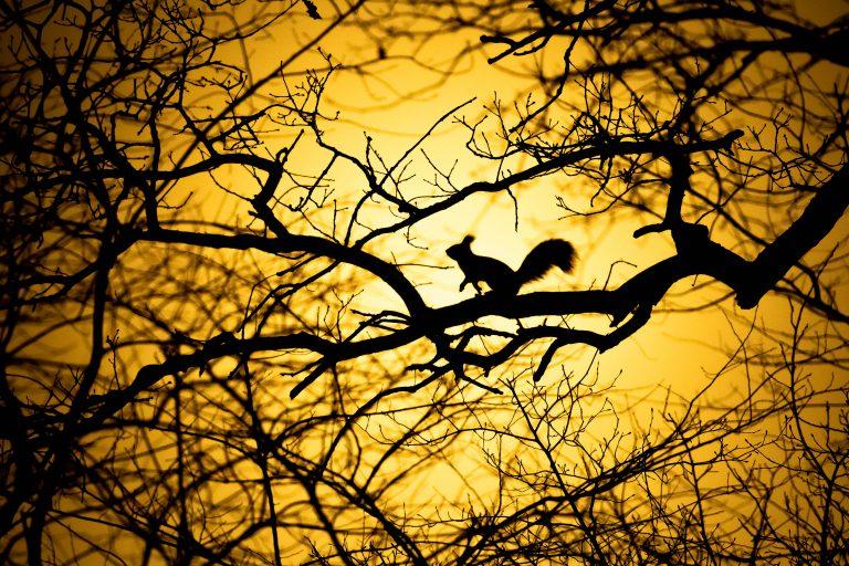 Het verhaal achter de winnende foto: een eekhoorn met tegenlicht