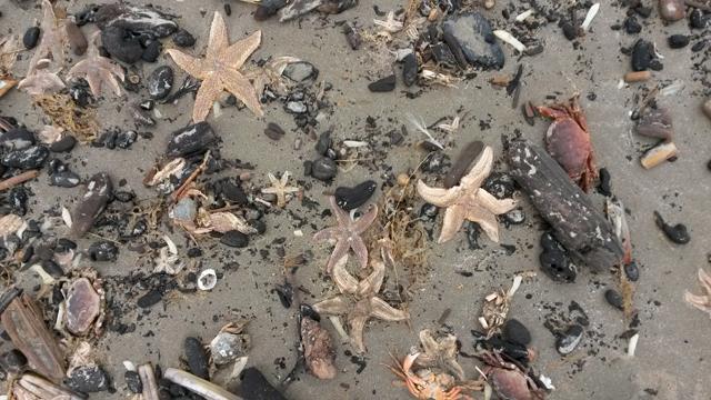 Strand vol zeesterren