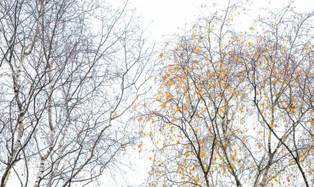 Herfstfotografie: de laatste blaadjes