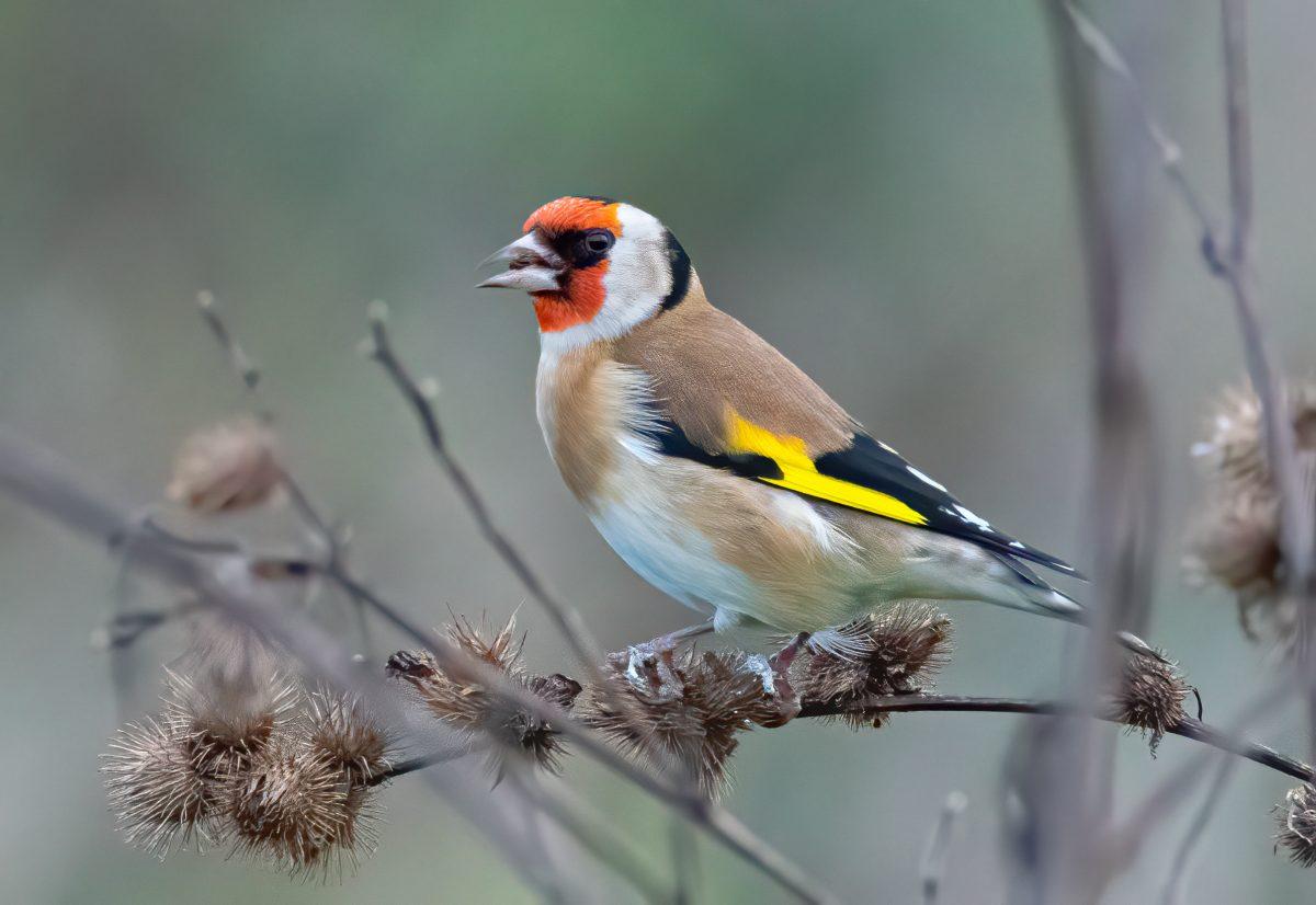 Nationale Tuinvogeltelling 2021