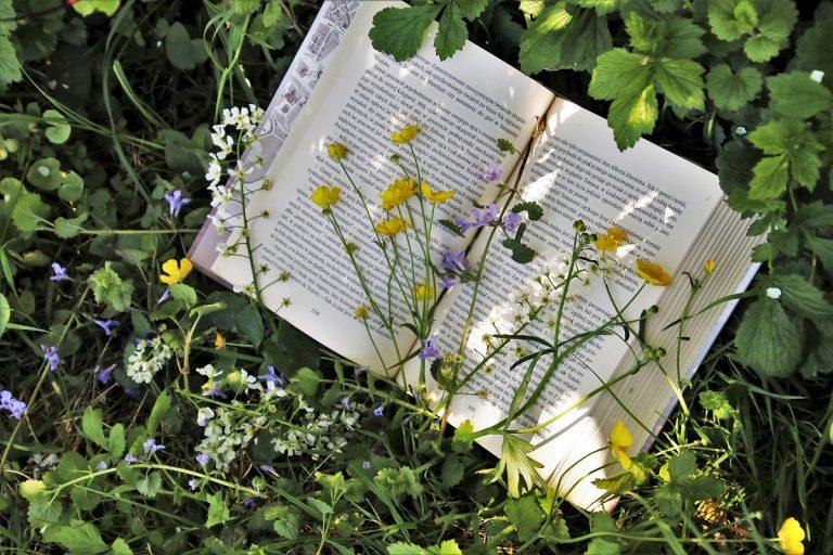 5 fijne natuurboeken voor deze zomer