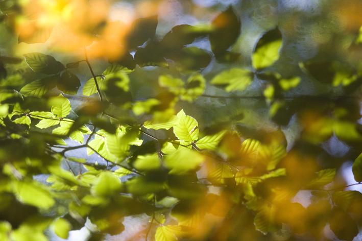 Reflecties op beekwater