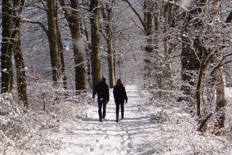 Winterwandelen in het Rijsterbos