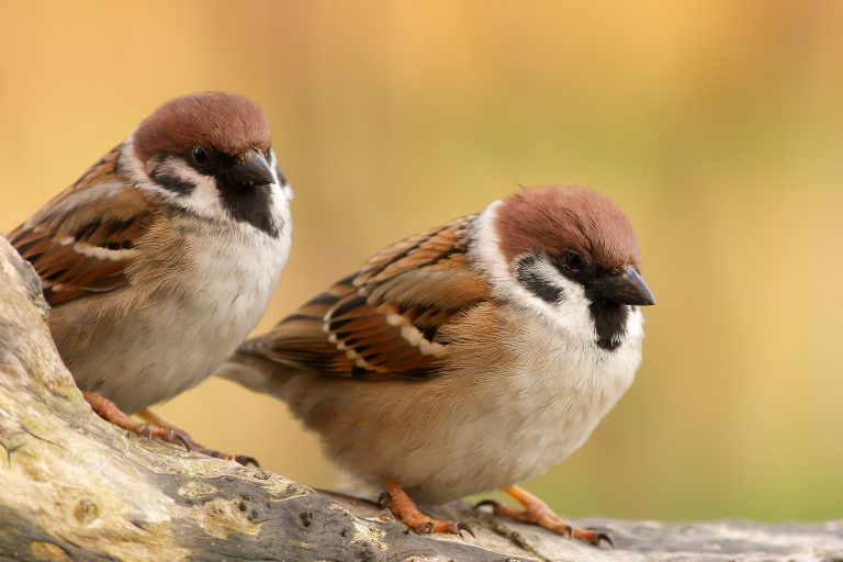 Waarom hebben sommige vogels 's zomers een andere snavel?