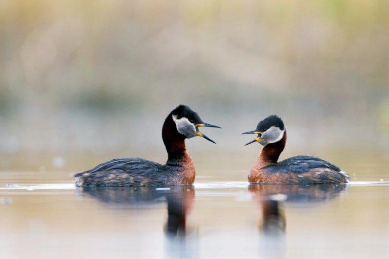 Een droom komt uit: Vogelmagazine