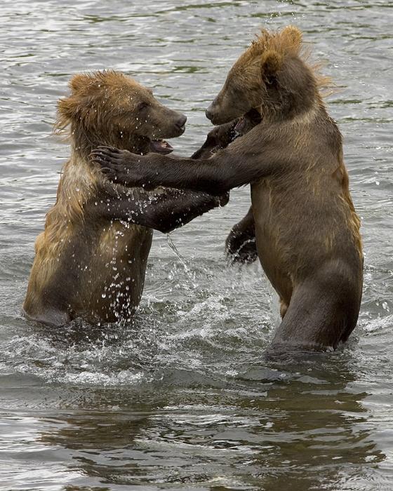 Berenbotten gevonden in Zeeland