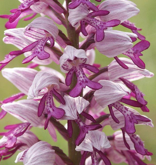 Het orchideeënseizoen is begonnen