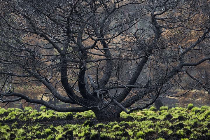 Fotograaf Theo Bosboom wint eerste prijs bij de Zilveren Camera