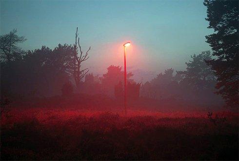 De invloed van kunstlicht op de natuur