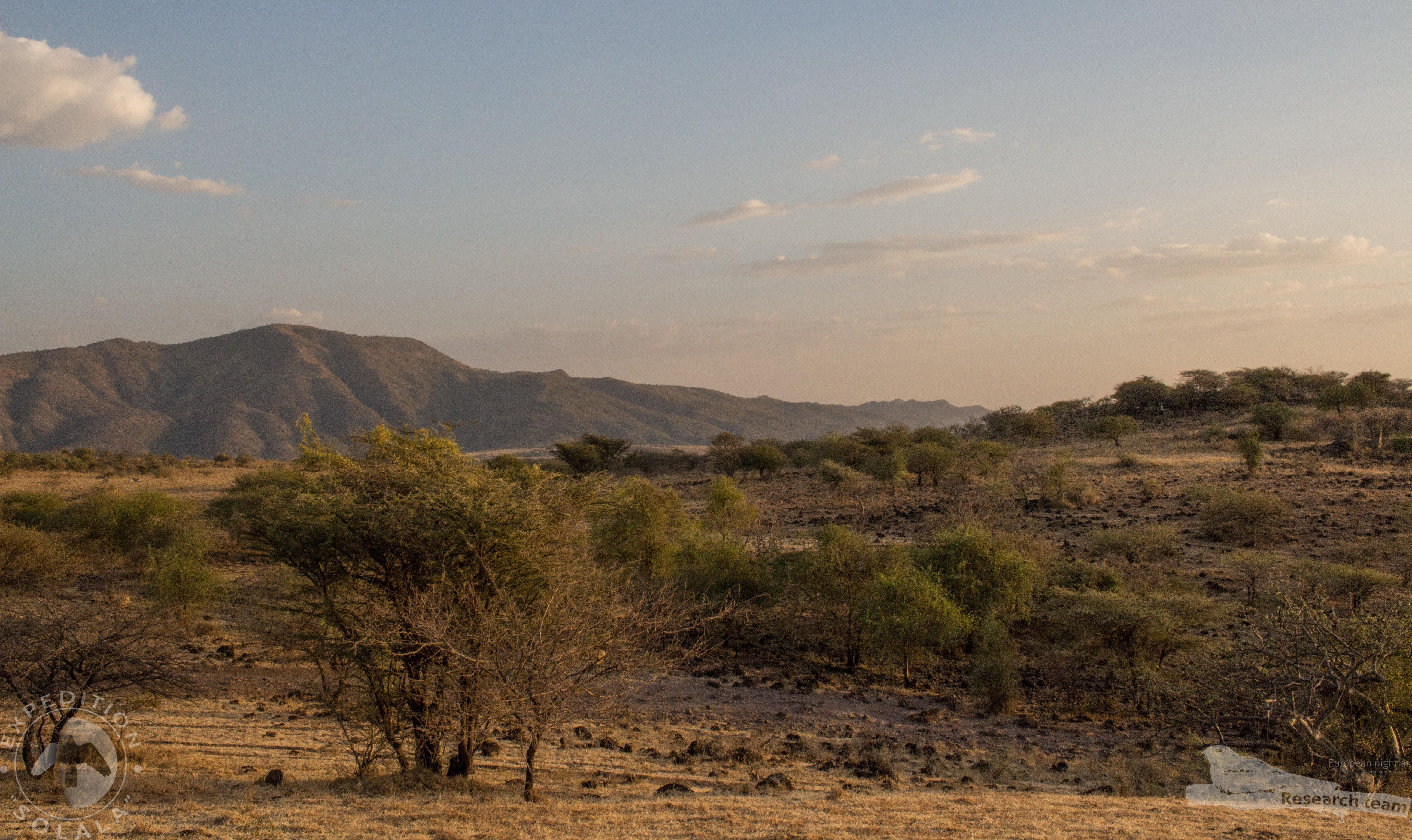 roots Zuidelijke deel Nechisar Plains