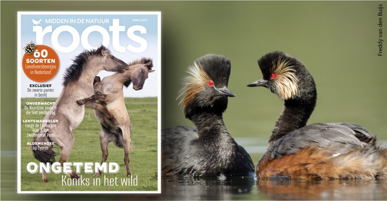 De Roots van april 2019 is uit!
