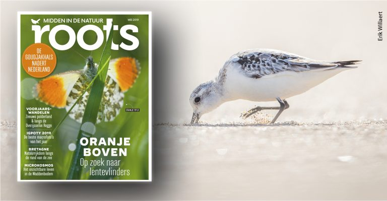 De Roots van mei 2019 is uit!