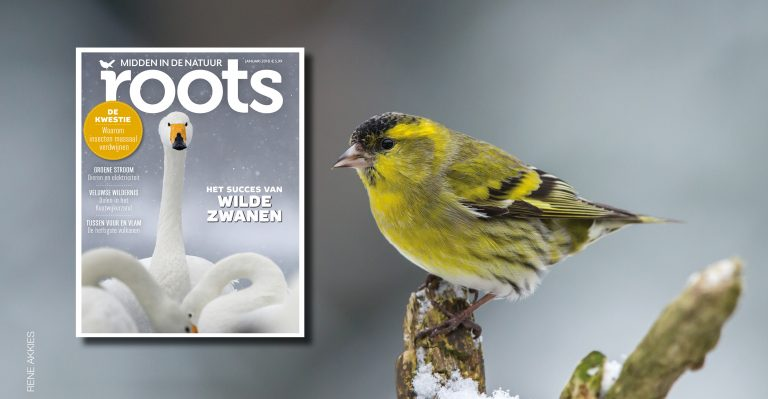 De Roots van januari 2018 is uit!