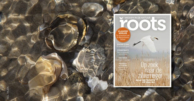 De Roots van november is uit!