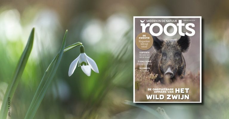 De Roots van februari 2018 is uit!