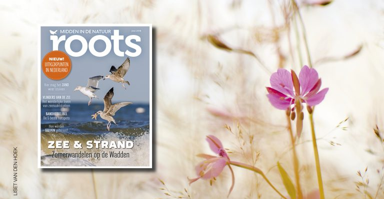 De Roots van juli 2018 is uit!