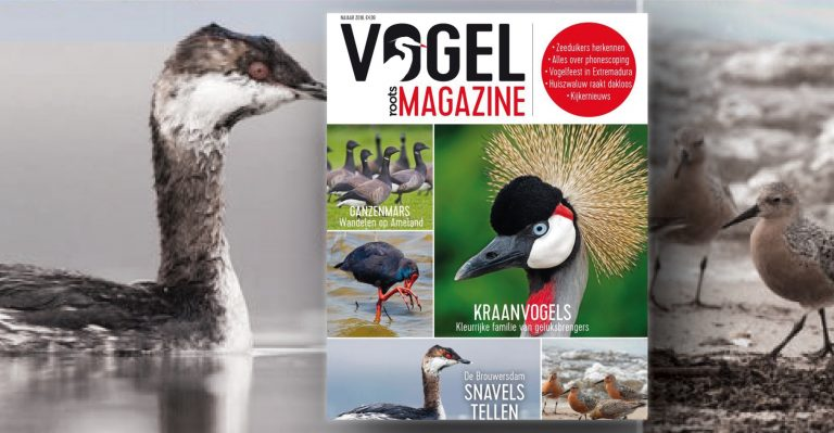 Roots Vogelmagazine najaar 2018 is uit!
