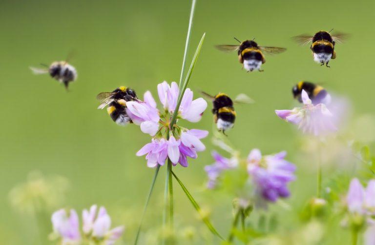 Nationale Bijentelling: tel de bijen in je eigen tuin