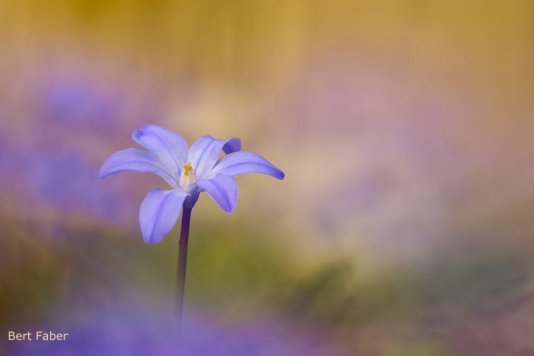 Zo fotografeer je voorjaarsbloeiers