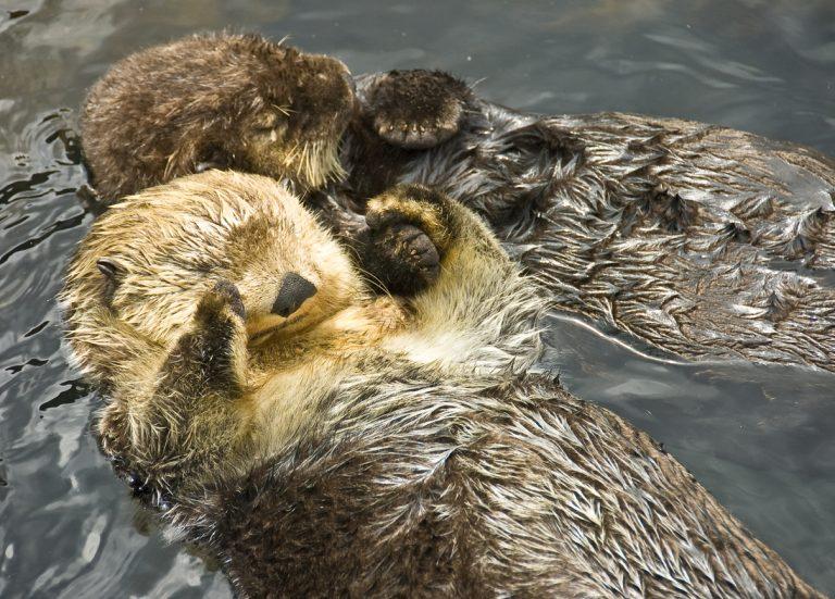 Van otters tot mieren: zo slapen deze 7 dieren
