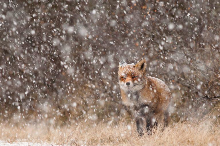 Zo fotografeer je dieren in de sneeuw