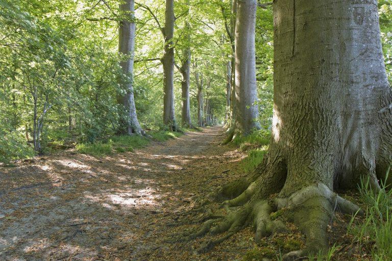 Roots geeft weg: 10 x 'Ongebaande paden'