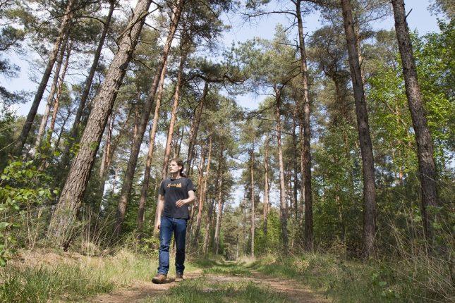 Wandelaar bossen Rechterense Veld