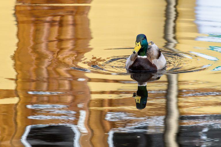 Stadseend met reflectie