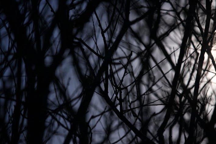 Een bos in het donker