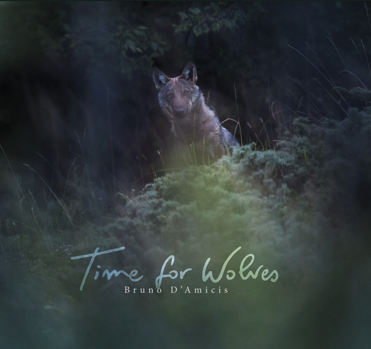 timeforwolves_260x236_cover july12th_A