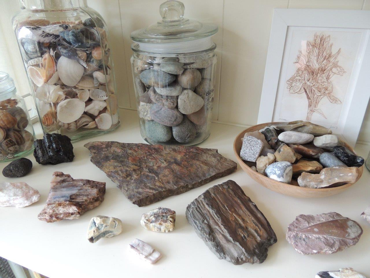 Trofeeënkast met tweede van rechtsonder fossiel stuk boomschors
