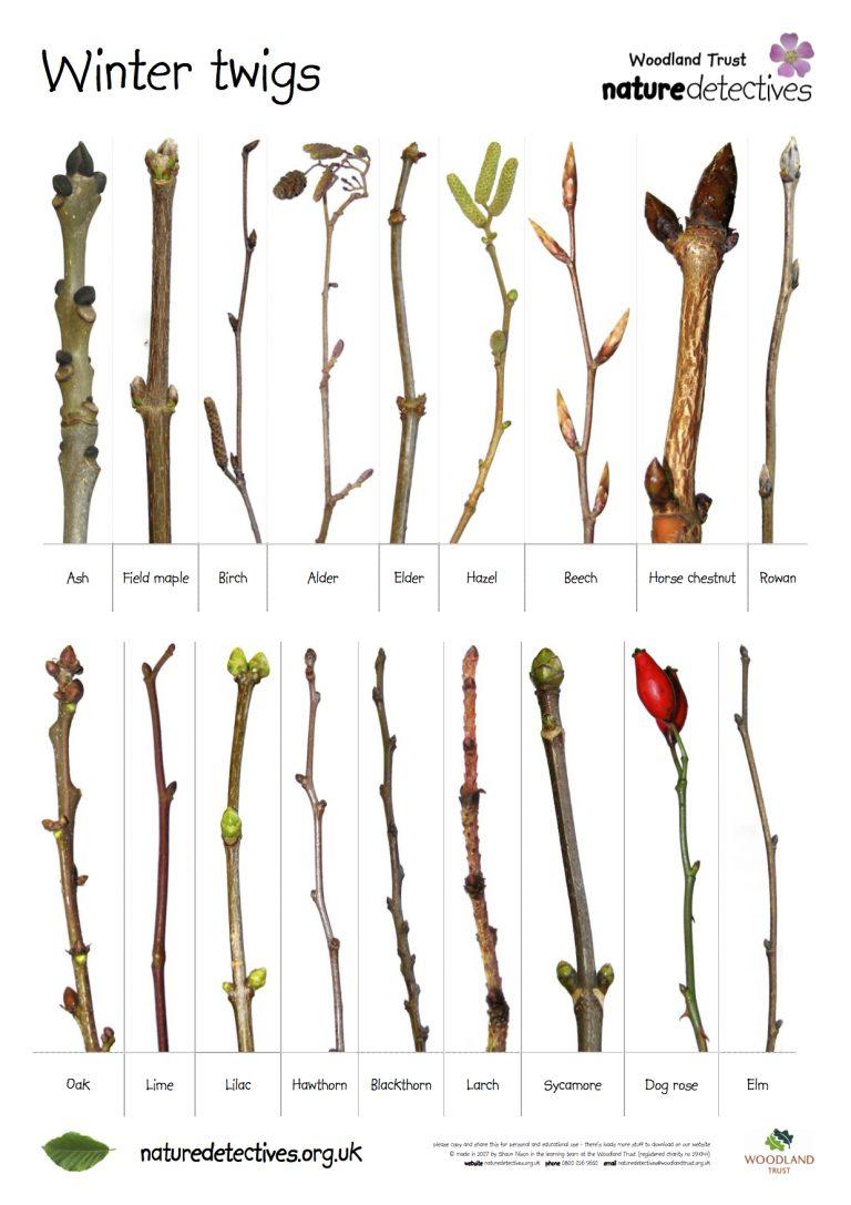 Boomknoppen: de belofte van een nieuwe lente