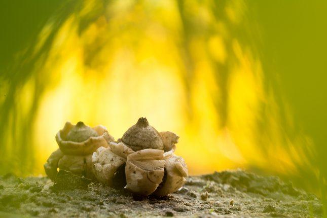 paddenstoelenfotografie