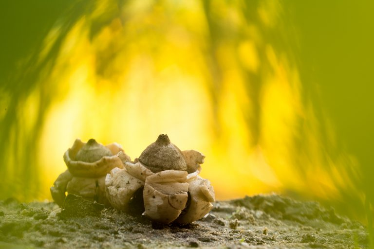 Hoe ver wil je gaan met paddenstoelenfotografie ?