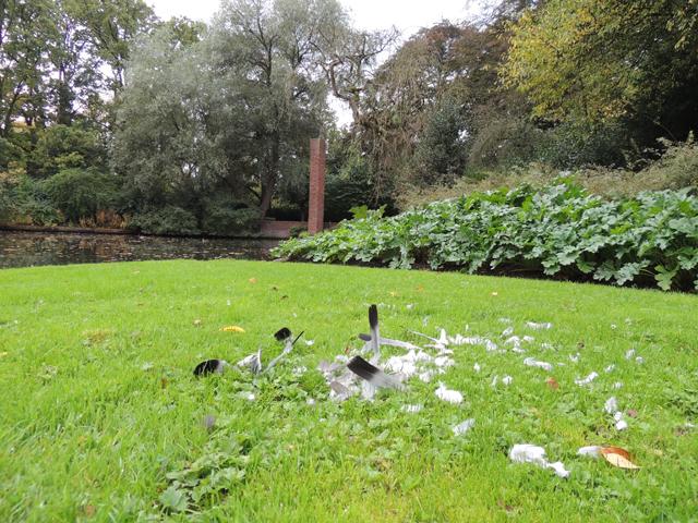 Verenrest in park