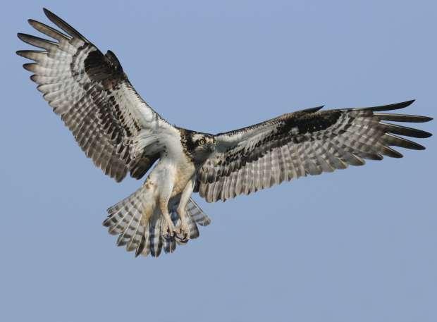 Vogelsafari op Texel